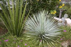 морозоустойчив тропические растения