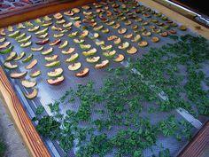 Herb Garden, Animal Print Rug, Herbs, Canning, Home Decor, Lawn And Garden, Decoration Home, Room Decor, Herbs Garden