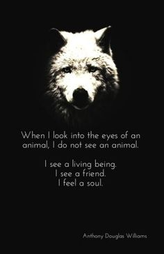 Wolf and quotes #wolf #quotes