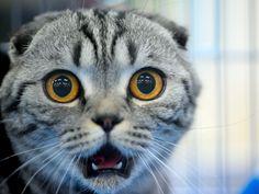 Tiere schockiert: Was soll uns dieser Blick nur sagen?