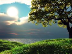 Backgrounds for Outlook Email/garden | Paisagens paisagens paraiso natureza sol mar arvore