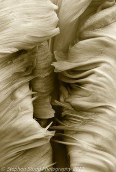 Homage to Edward Weston by Stephen Studd Photography, via 500px  http://500px.com/photo/4591948