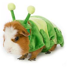 All Living Things® Small Pet Caterpillar