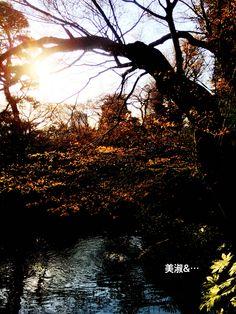 新芽、夕焼けに輝く。 노을이 감싸는 새싹들.