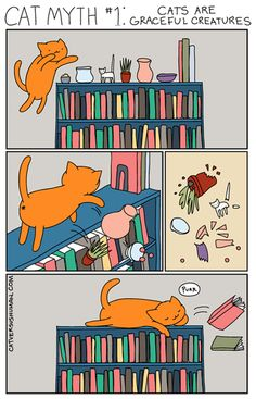 One of The Most Persistent Myths About Cats
