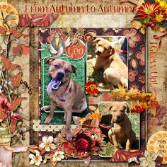 This is for Janet's November 2016 Template Challenge, and Betsyfru's November 2016 Bluebird Mix and Match Challenge.  I used the Wonderful Free Template (Thank You Janet!), as well as the Bluebird Mix and Match kits Winters Rest Pack 1, Winters Rest Pack 2 both by Nutkin Tailz Designs, Autumn Bouquet by Graphic Creations, and Sewing Old by Kittyscrap.