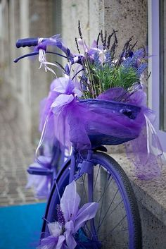 Pretty bicycle of lilac