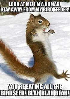 There are lots of squirrel like mammals like the ground hog, gopher as well as prairie dog. When it comes to foods, what do squirrel love to eat? Funny Animal Pictures, Cute Funny Animals, Funny Cute, Funny Squirrel Pictures, Hilarious Pictures, Animals And Pets, Baby Animals, Smiling Animals, Nature Animals