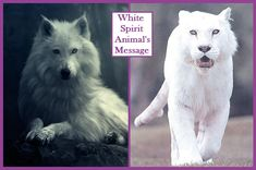 Inspires Vibrational Energy Self-Healing Practices Animal Spirit Guides, Spirit Animal, White Spirit, Power Animal, Self Healing, Husky, Dogs, Animals, Inspiration