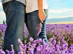 I hope to find a lavender field to take engagement pictures at :)