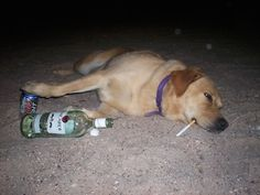 man_file_1056422_26.DrunkDog