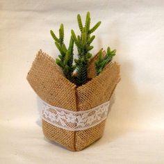 macetitas de yute con plantas suculentas