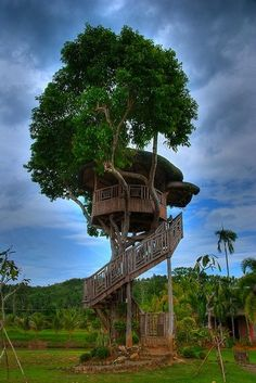 How about these Tree Houses, I want one.