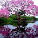 Inviting Spring Flowering Tree