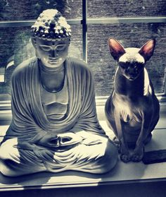 Meditation: the Buddha and the Cat (hairless).