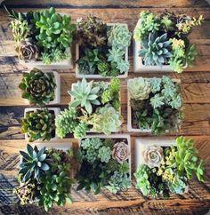 succulents / floral crush studio