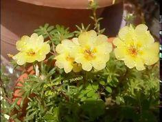 Oμορφα λουλούδια Plants, Flora, Plant
