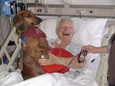 Dachshund Shasta specializes in visiting ICU patients  and brightening up their day.
