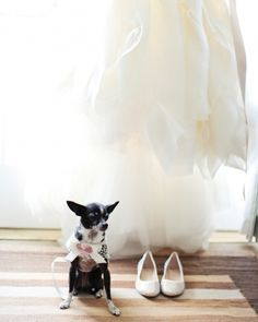 Lola the Chihuahua acted as the ring bearer, and wore a crocheted outfit made by the mother of the bride.