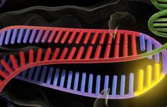 Una gif è stata memorizzata nel dna di un batterio. Sistema Crispr Cas9