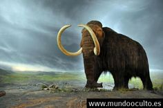 Resucitar a los mamut para qué?