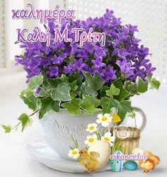 Greek Easter, Herbs, Herb, Medicinal Plants