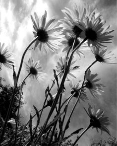 A beautiful B&W photo of flowers.