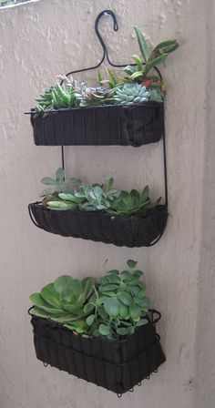 Materials: Visen bath caddiesDescription: I have a tiny patio which receives very little light, but I still wanted a home for plants. The patio wall managed to