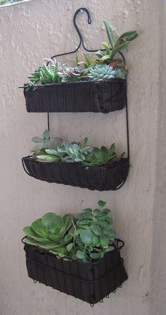bath organizer to succulent garden - IKEA Hackers