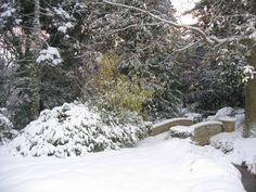 winter_garden_and_bridge