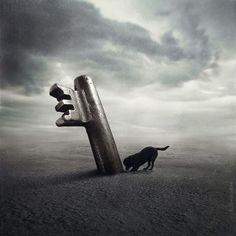 Help Dogs with Images photos surrealistes pour des animaux a adopter 6   Des images surréalistes pour des animaux à adopter   surrealiste Sa...