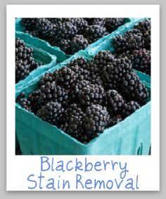 blackberry stain removal ~ great knowledge for berry season