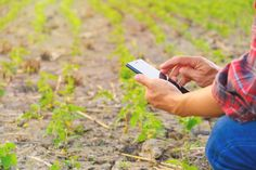 Farmer using mobile checking report of soybeans in farm with copy space , Farmer, Vectors, Icons, Space, Milk Bottles, Silk Soy Milk, Soy Sauce, Fall Harvest, Ikon