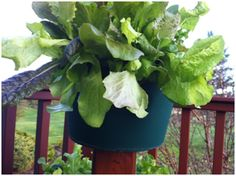 Grow More Vegetables on Balconies, Decks and Patios with My Garden Post