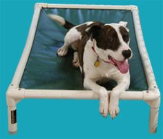 Donate a dog bed to a shelter