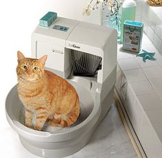 I have three cats, and as much as I love them, I hate cleaning litter boxes. I decided a month ago to stop cleaning my cat box. Here is my story, and why it was a great decision: This is not my Self Cleaning Litter Box, Cat Toilet, Three Cats, Like A Cat, Cat Room, Cat Behavior, Buy A Cat, Pet Care, Cats And Kittens