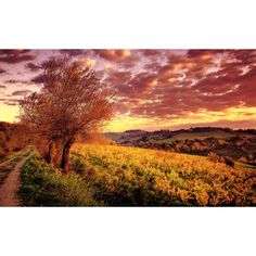 Sunset Over Tuscany Vineyard ❤ liked on Polyvore featuring backgrounds