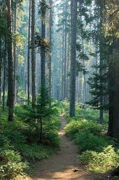 into the woods #roadtonowhere