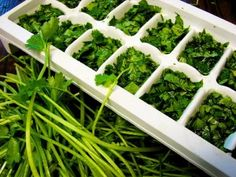 Freeze fresh herbs in olive oil or butter or water!