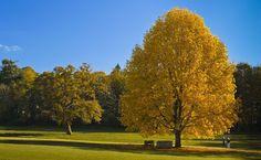 Le parc du château de Tronjoly à Gourin