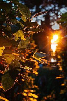Light Background Images, Photo Background Images, Photo Backgrounds, Summer Nature Photography, Amazing Photography, Art Photography, Fall Wallpaper, Nature Wallpaper, Image Nature