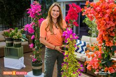 SET YOUR DVR'S FOR TOMORROW, THURSDAY! I'm presenting on Bougainvilleas on Home & Family on Hallmark Channel USA  Thank you to Monrovia for the beautiful selection of plants!