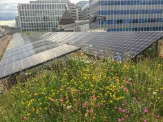 A gallery of images of solar on green roofs