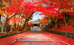 Entrance of the temple Bishamon-do covered with red leaves in autumn season  Visit www.wattention.com/?utm_content=bufferea44a&utm_medium=social&utm_source=pinterest.com&utm_campaign=buffer WAttention - Bringing you the best of Japan, from the very latest trends to the most traditional aspects of its culture.  #wattention #bishamon #temple #japan
