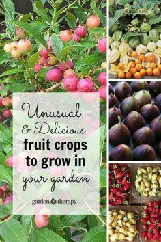 This is a great list of unusual fruit to grow - like ground cherries, pink blueberries, and cocktail kiwis! I generally look for unique edible plants to grow and purchase the standard fare items at the store or farmers market!