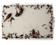 Insects, Philip Williamson