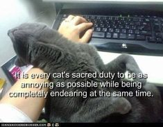 How Can I Stay Mad at that Fluff? - LOLcats is the best place to find and submit funny cat memes and other silly cat materials to share with the world. We find the funny cats that make you LOL so… I Love Cats, Cute Cats, Funny Cats, Funny Animals, Cute Animals, Cat Fun, Funniest Animals, Wild Animals, Crazy Cat Lady