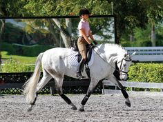 Sandy Hotz offers advice on making your horse's trot more elastic.