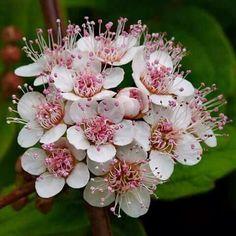 Bouquet & Parfum