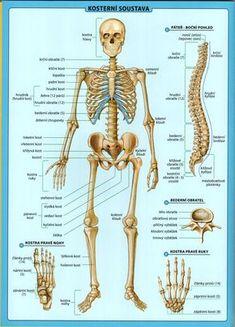 lidské tělo tabulka.2.jpeg